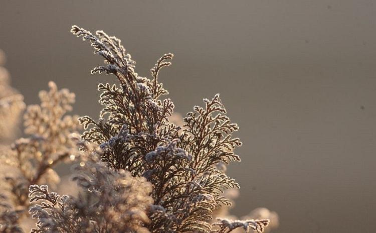 【分子栄養学から見る】花粉症は糖質制限で楽になる?!