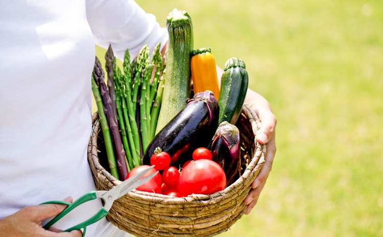 【管理栄養士から見た】手軽に始められる夏バテ解消レシピ